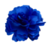 Item blue flower.png